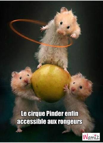 Cirque Pinder, lolcats réalisé sur Wamiz