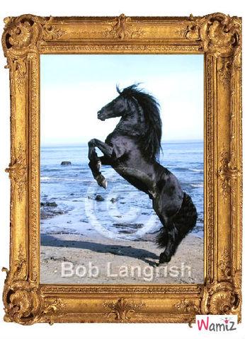cheval cabré sur la plage., lolcats réalisé sur Wamiz