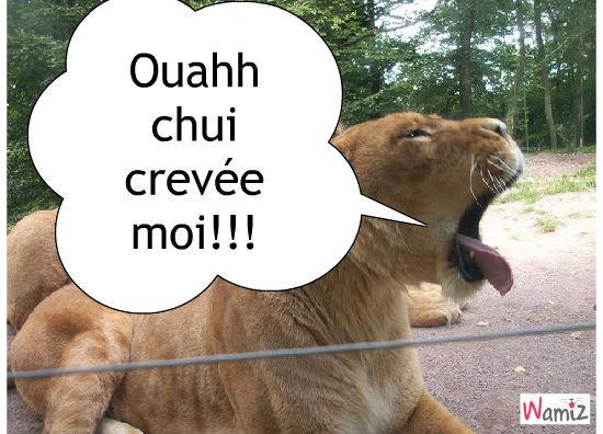 Une lionne très fatiguée !!!, lolcats réalisé sur Wamiz