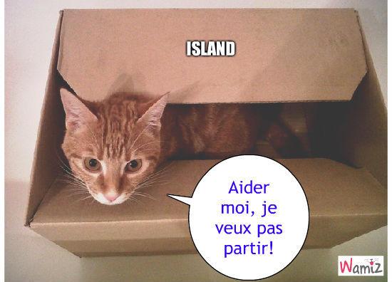 ISLAND CAT, lolcats réalisé sur Wamiz