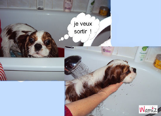 Douky au bain, lolcats réalisé sur Wamiz