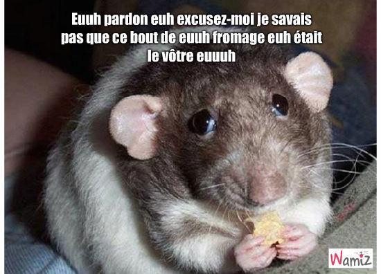 Rémy de Ratatouille, lolcats réalisé sur Wamiz