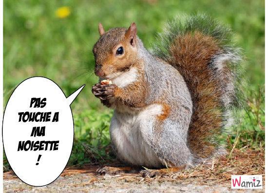 écureuil, lolcats réalisé sur Wamiz