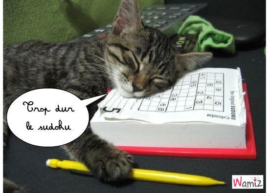 chat et sudoku, lolcats réalisé sur Wamiz