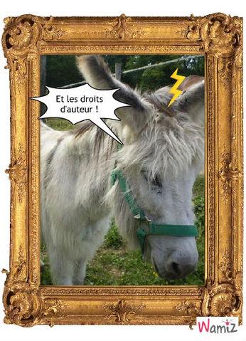 Mon âne, lolcats réalisé sur Wamiz