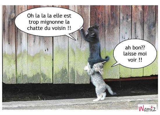la chatte du voisin, lolcats réalisé sur Wamiz