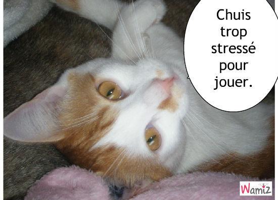 Un chat vraiment stressé!, lolcats réalisé sur Wamiz