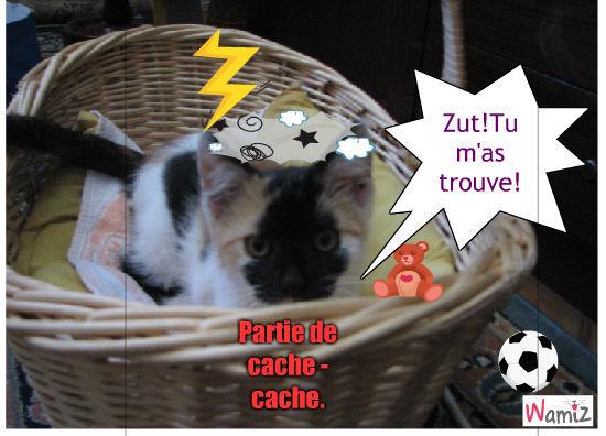 Partie de cache-cache avec un chat, lolcats réalisé sur Wamiz