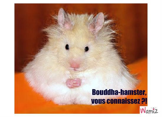 Bouddha-hamster, lolcats réalisé sur Wamiz