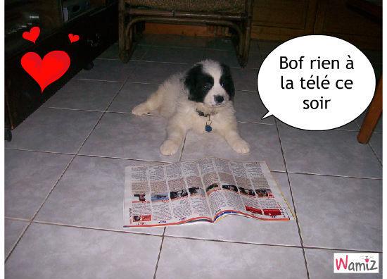 Lecture pour chien, lolcats réalisé sur Wamiz