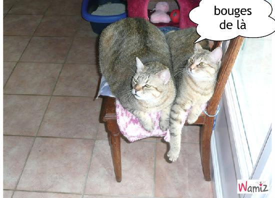 le duo gougou et pupuce, lolcats réalisé sur Wamiz