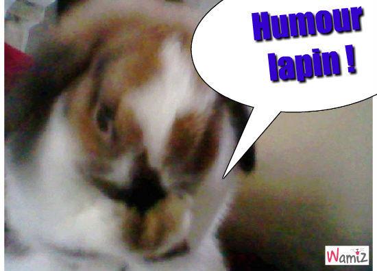 Humour lapin, lolcats réalisé sur Wamiz