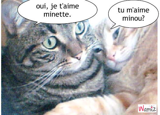 amour de chetamour de chat, lolcats réalisé sur Wamiz