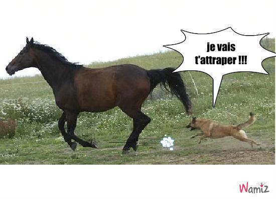 chien qui court apres un cheval, lolcats réalisé sur Wamiz