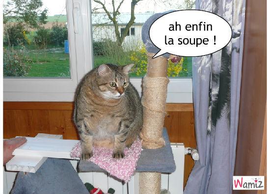 la soupe de gougou, lolcats réalisé sur Wamiz
