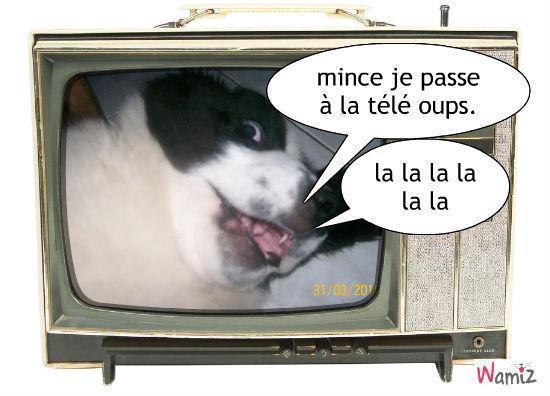 la télé, lolcats réalisé sur Wamiz