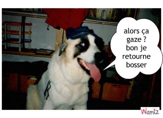 un chien qui bosse, lolcats réalisé sur Wamiz