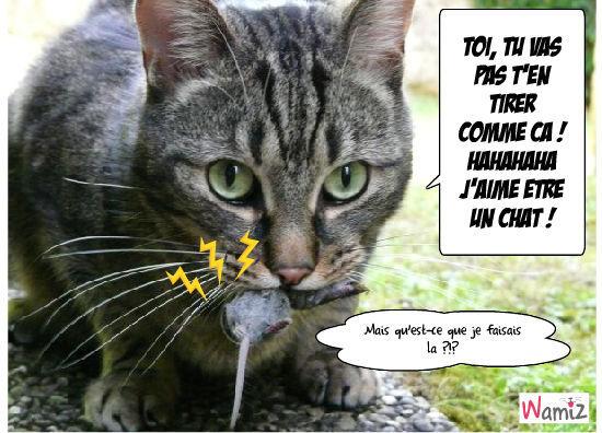 La chat et la souris, lolcats réalisé sur Wamiz