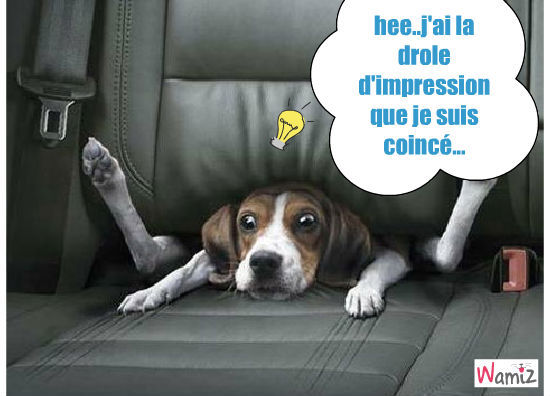 voiture.. pas pour les chiens!!!, lolcats réalisé sur Wamiz