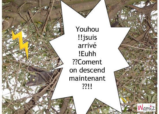 Grisette coincé dans l'arbre !, lolcats réalisé sur Wamiz