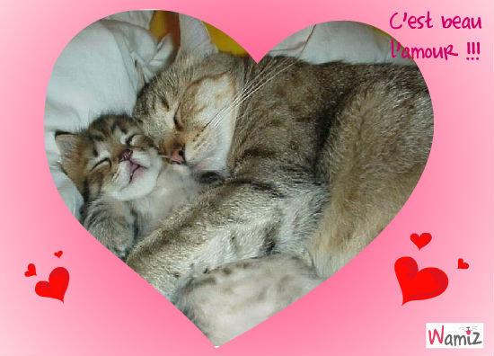 Un chaton et sa mère , lolcats réalisé sur Wamiz