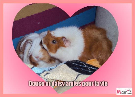 Douce et Daisy, lolcats réalisé sur Wamiz
