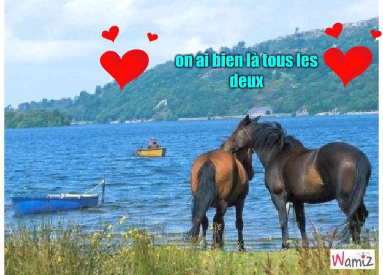jument et cheval , lolcats réalisé sur Wamiz