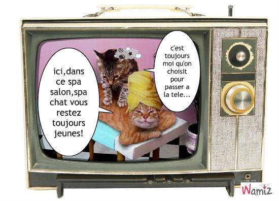 le spachat,un spa salon pour chats..., lolcats réalisé sur Wamiz