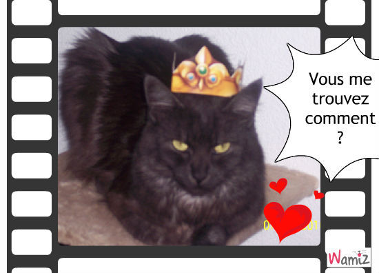 Je suis reine, j'ai eu la féve !, lolcats réalisé sur Wamiz