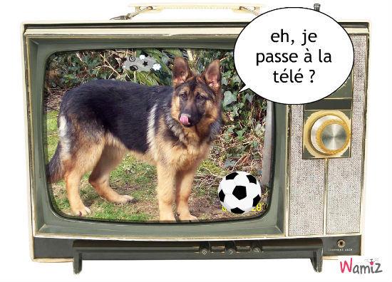 La Télé !!!, lolcats réalisé sur Wamiz