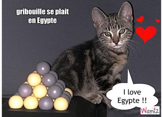 ph.jaume@online.fr, lolcats réalisé sur Wamiz