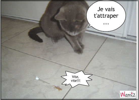 Attrape chat, lolcats réalisé sur Wamiz