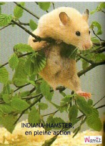 Indiana hamster, lolcats réalisé sur Wamiz