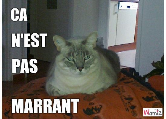 LOLcat ?, lolcats réalisé sur Wamiz