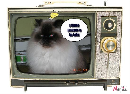 benjo chat, lolcats réalisé sur Wamiz