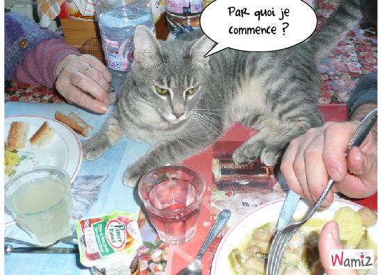 Le repas de Grisou, lolcats réalisé sur Wamiz