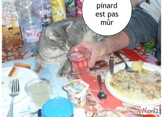 le verre de pinard, lolcats réalisé sur Wamiz