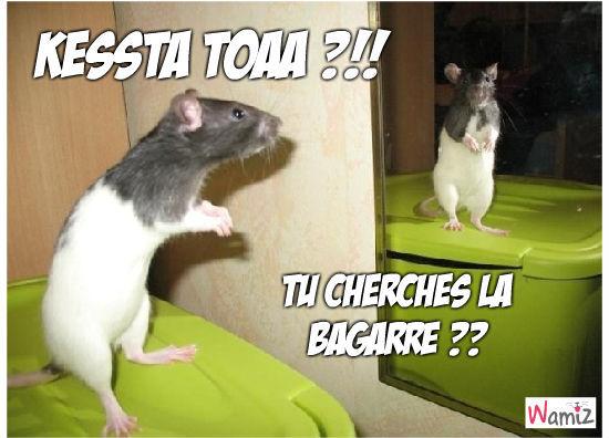 Rat fight, lolcats réalisé sur Wamiz