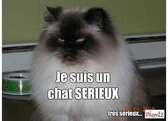 Serious Cat, lolcats réalisé sur Wamiz