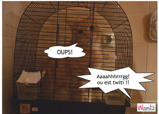 OUPS !, lolcats réalisé sur Wamiz