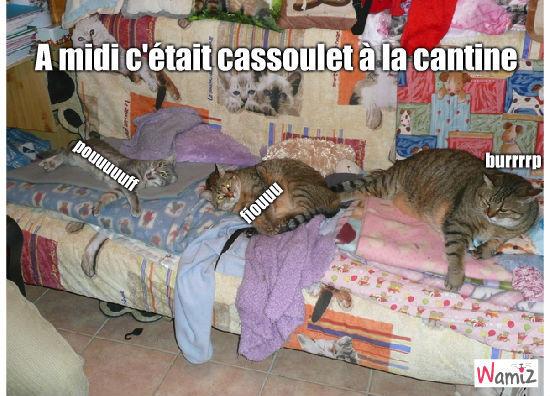 Cassoulet, lolcats réalisé sur Wamiz