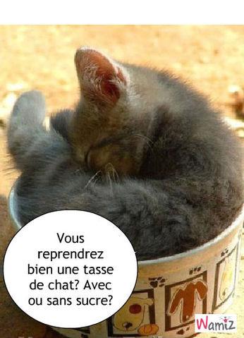 tasse de chaton, lolcats réalisé sur Wamiz