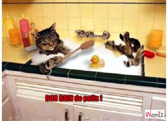Bon bain de poils !, lolcats réalisé sur Wamiz