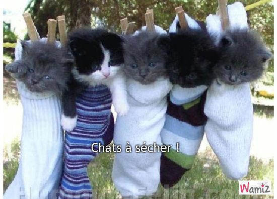 Chats à sécher !, lolcats réalisé sur Wamiz
