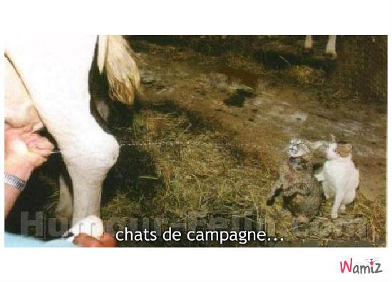 Chats de campagne, lolcats réalisé sur Wamiz