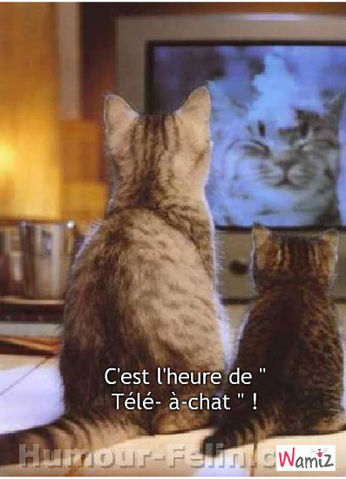 C'est l'heure de télé à chat !, lolcats réalisé sur Wamiz