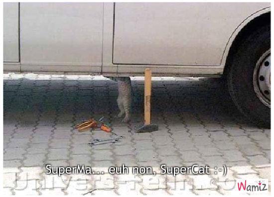 Superma...euh , super cat !, lolcats réalisé sur Wamiz