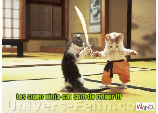 Les supers Ninja-cat sont de retour !, lolcats réalisé sur Wamiz