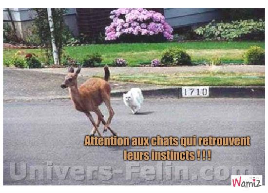 Attention aux chats qui retrouvent leurs instincts!, lolcats réalisé sur Wamiz