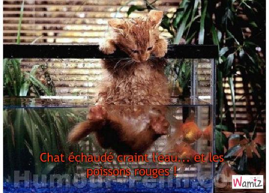 Chat échaudé craint l'eau !, lolcats réalisé sur Wamiz
